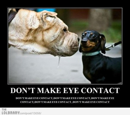 dont-make-eye-contact-13056